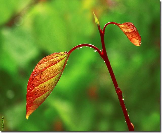 Flickr_spring_growth.jpg